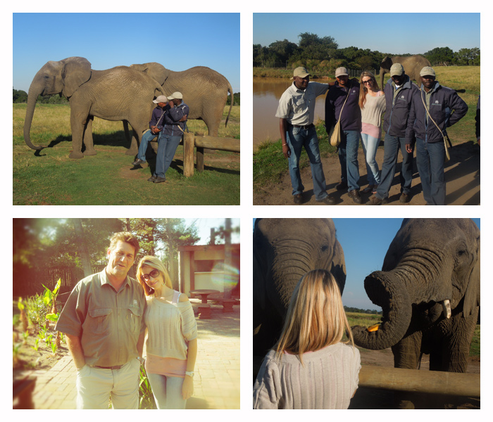 Elephant Sanctuary Plett