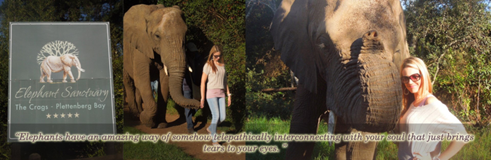 Mission 51- Walk with African Elephants at the Plettenberg Elephant Sanctuary